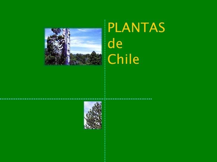 Plantas de chile for Plantas de exterior chile