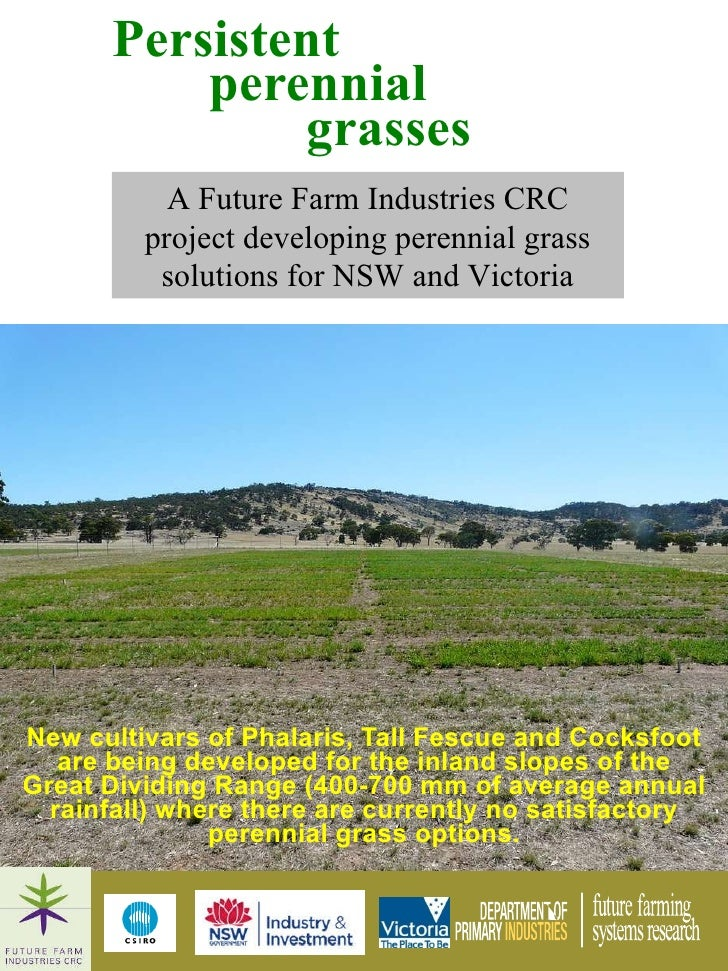 <ul><li>New cultivars of Phalaris, Tall Fescue and Cocksfoot are being developed for the inland slopes of the Great Dividi...
