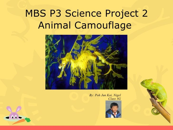 MBS P3 Science Project 2   Animal Camouflage                 By: Poh Jun Kai, Nigel                          Class 3G