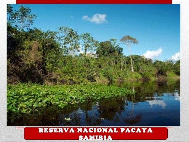 1 RESERVA NACIONAL PACAYA SAMIRIA