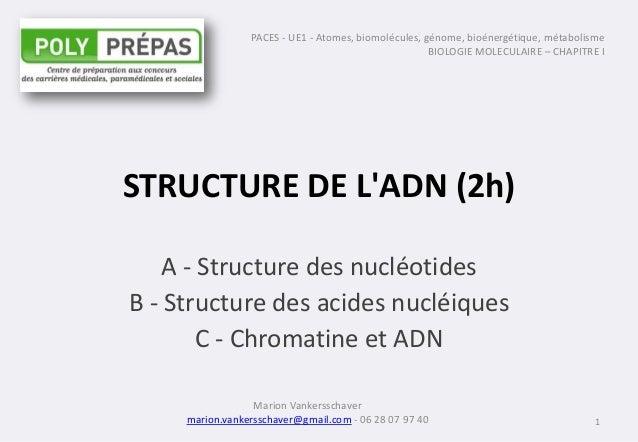 STRUCTURE DE L'ADN (2h) A - Structure des nucléotides B - Structure des acides nucléiques C - Chromatine et ADN 1 PACES - ...