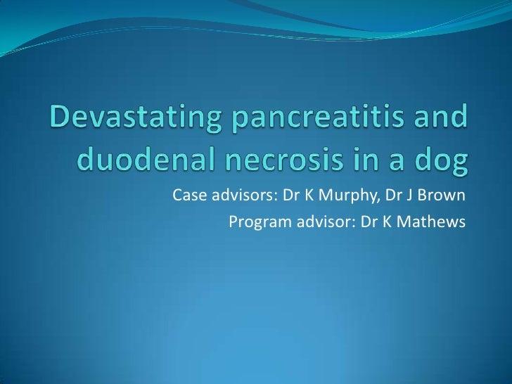 Devastating pancreatitis and duodenal necrosis in a dog<br />Case advisors: Dr K Murphy, Dr J Brown<br />Program advisor: ...