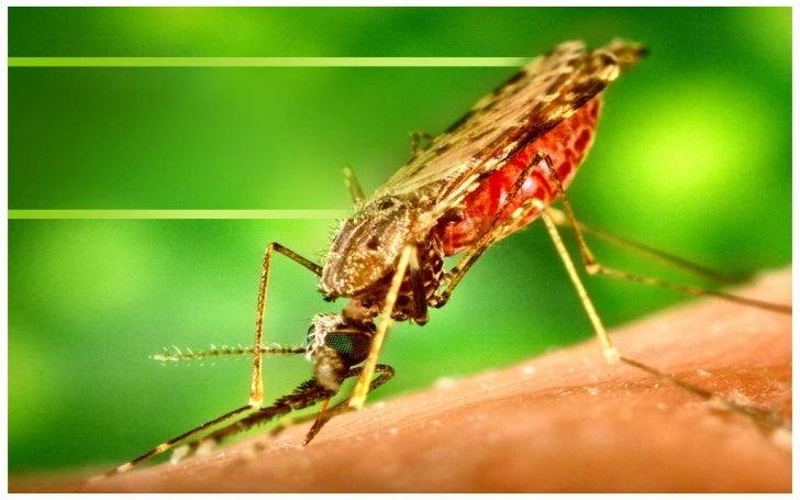 Paglikay sa dengue (Prevention)