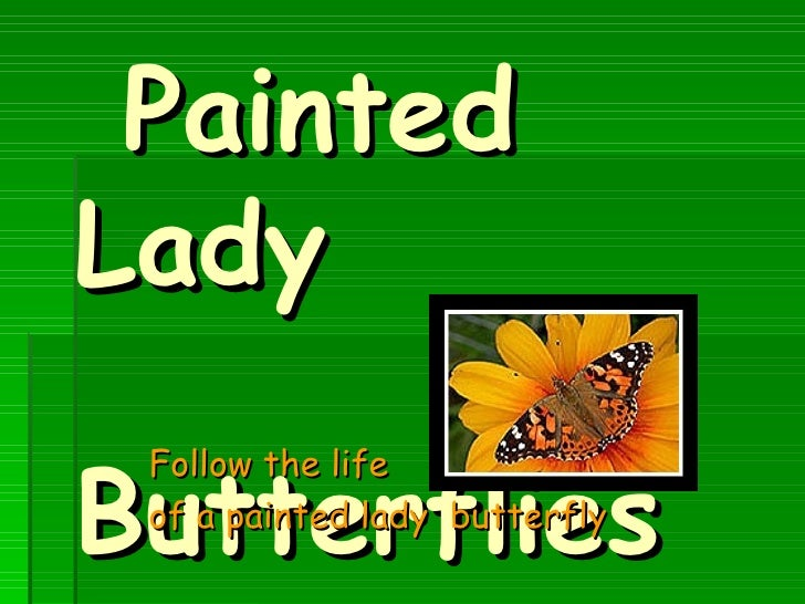 Painted Lady  Butterflies Follow the life  of a painted lady  butterfly