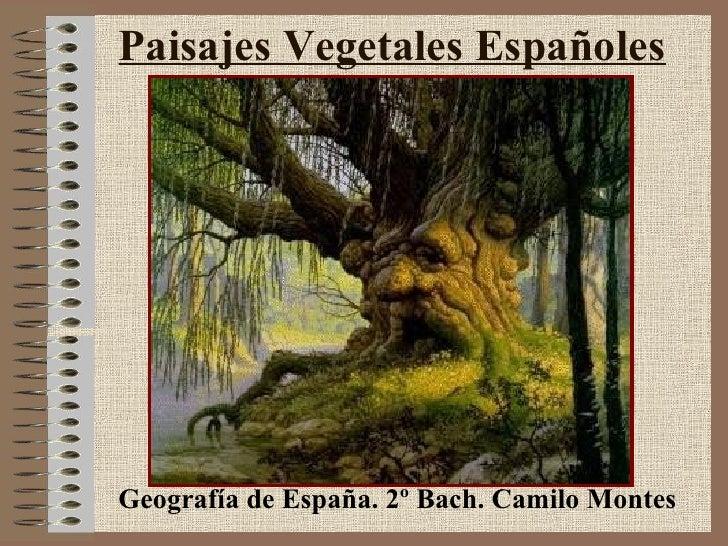 Paisajes Vegetales Españoles Geografía de España. 2º Bach. Camilo Montes