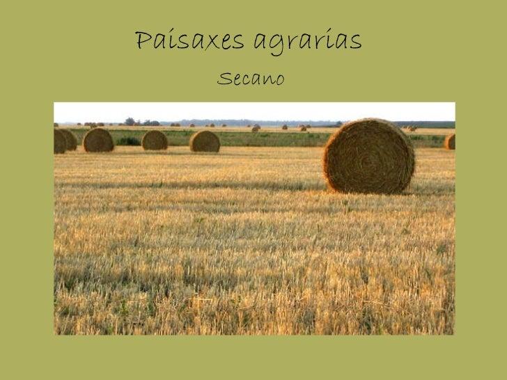 Paisaxes agrarias Secano