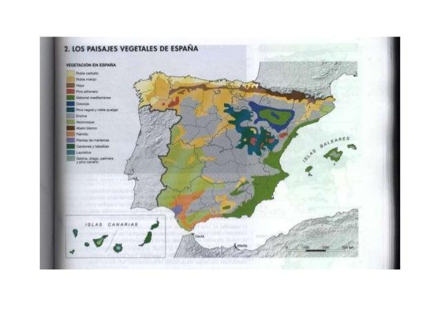 Paisajes de España: vegetación potencial