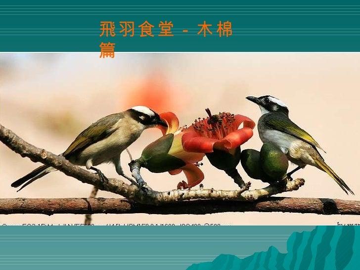 飛羽食堂-木棉篇