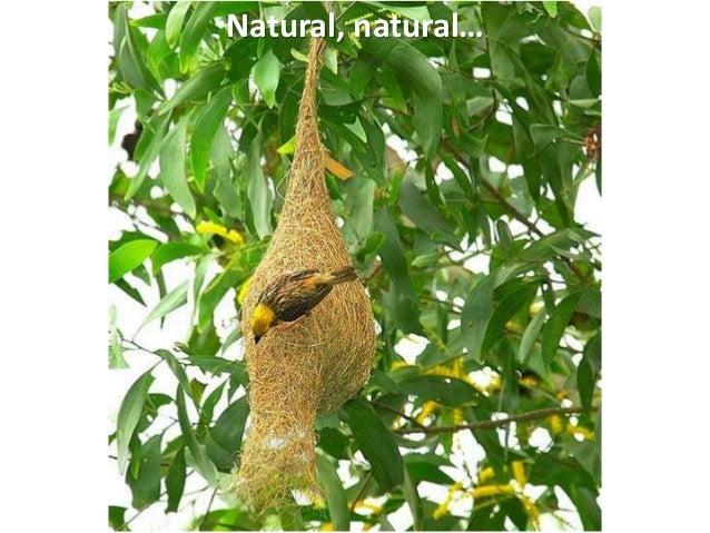Natural, natural…