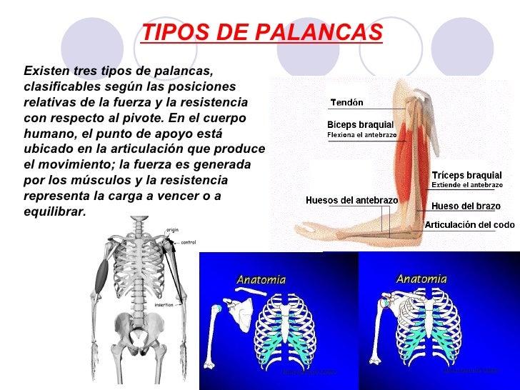 Tipos de palancas del cuerpo humano ejemplos : Descargar Sendblaster ...