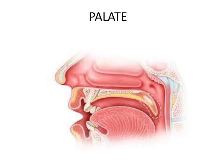 PALATE<br />