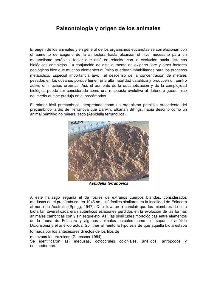 Paleontología y origen de los animales