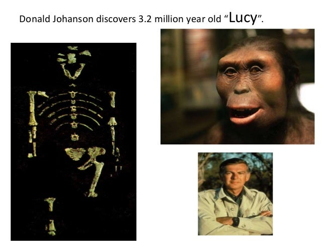Carbon dating human fossils and evolution 2