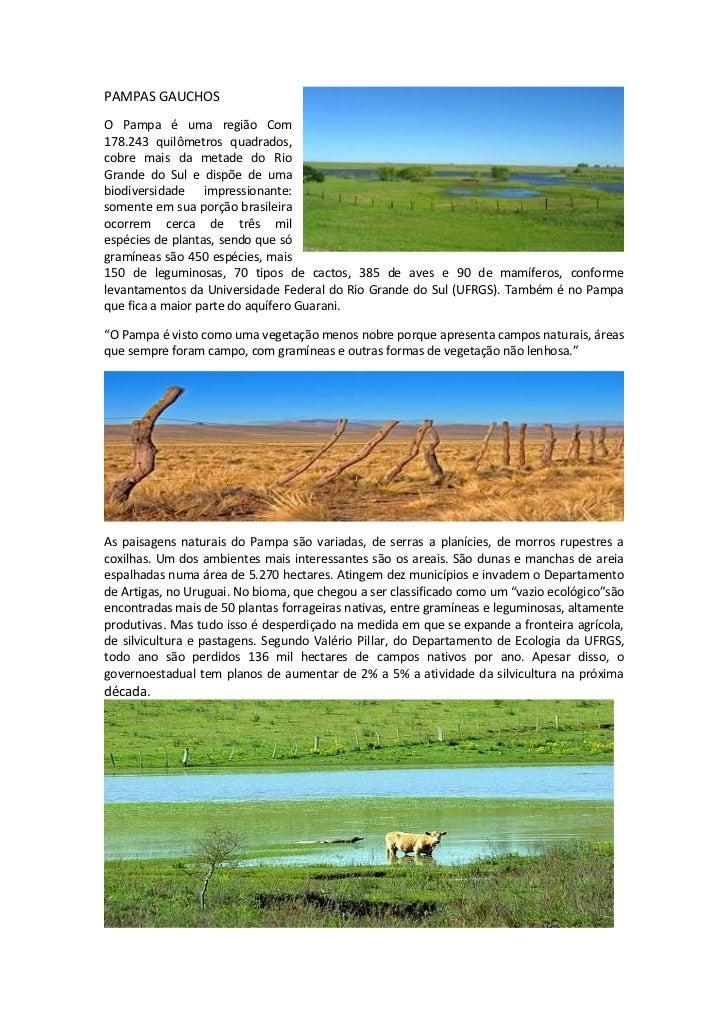 PAMPAS GAUCHOSO Pampa é uma região Com178.243 quilômetros quadrados,cobre mais da metade do RioGrande do Sul e dispõe de u...