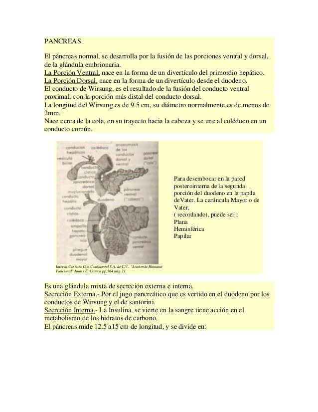 PANCREAS El páncreas normal, se desarrolla por la fusión de las porciones ventral y dorsal, de la glándula embrionaria. La...
