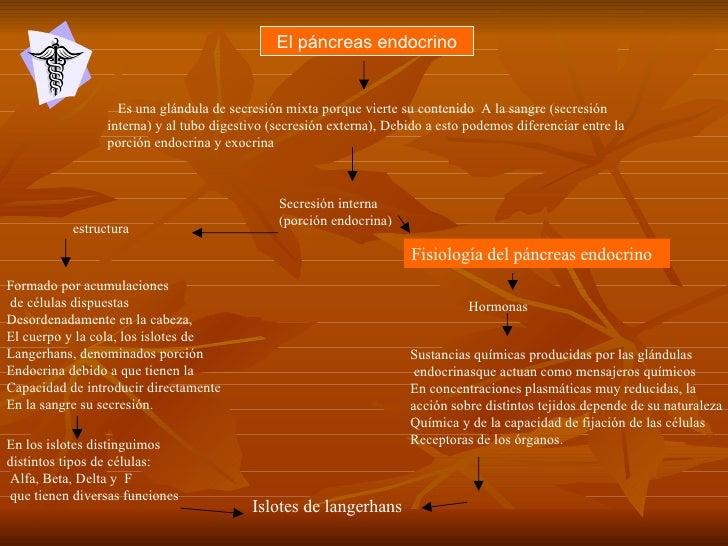 Pancreas Endocrino Hector Machado nutricion universidad del zulia