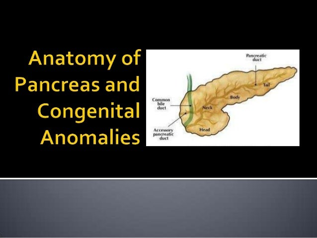 • To explain about anatomy of pancreas: – Gross : blood supply, lymphatic drainage, innervations, ducts system, embryology...
