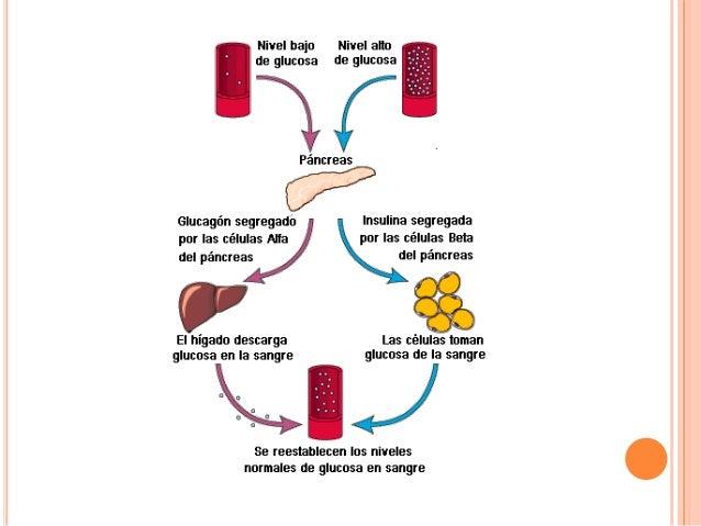 Pancreas e insulina