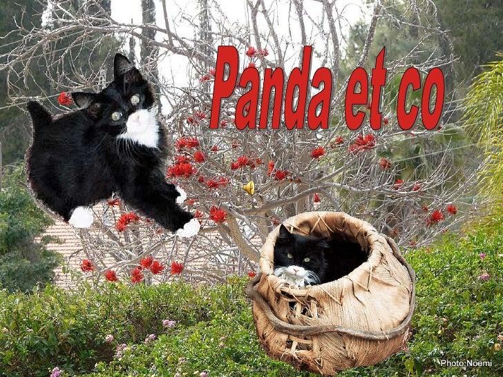 Panda et co