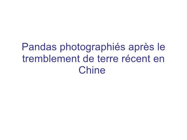 Pandas photographiés après le tremblement de terre récent en            Chine