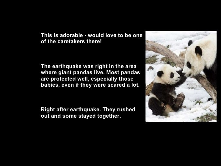 This is adorable - would love to be one of the caretakers there! The earthquake was right in the area where giant pandas l...