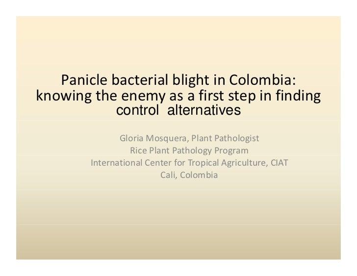 PaniclebacterialblightinColombia:                        gknowingtheenemyasafirststepinfinding              ...