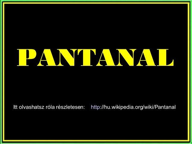 As belezas do Pantanal Mato-grossense - Brasil