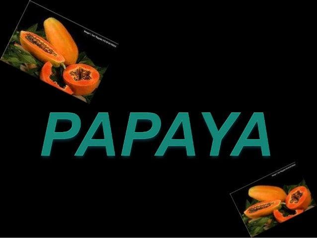 PAPAYA PAPAW PAWPAW NORTHAMERICAN:- PAPAYA FLAN DISH