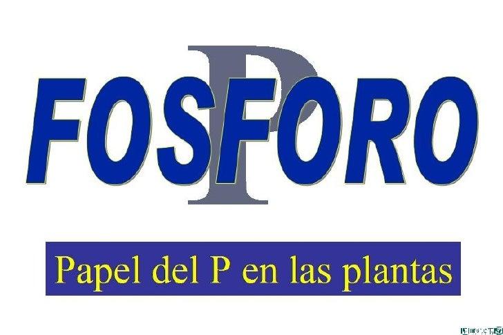 Papel Del FóSforo En Las Plantas