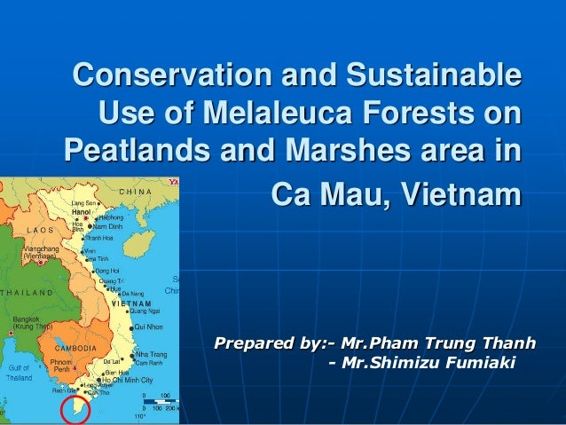 Conservation and Sustainable  Use of Melaleuca Forests onPeatlands and Marshes area in             Ca Mau, Vietnam        ...