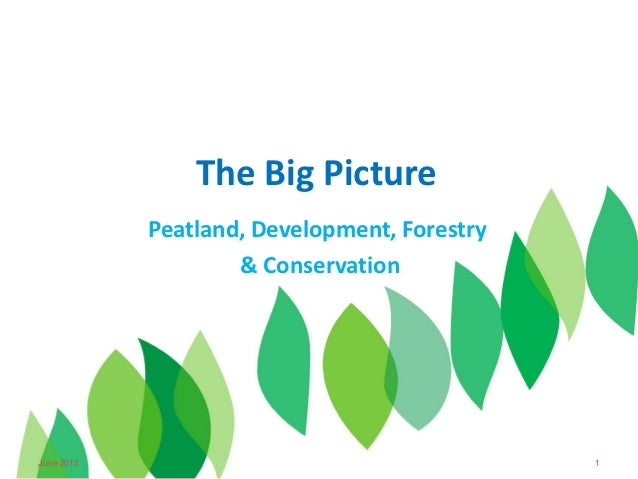 The Big Picture               Peatland, Development, Forestry                       & Conservation27 June 2012            ...
