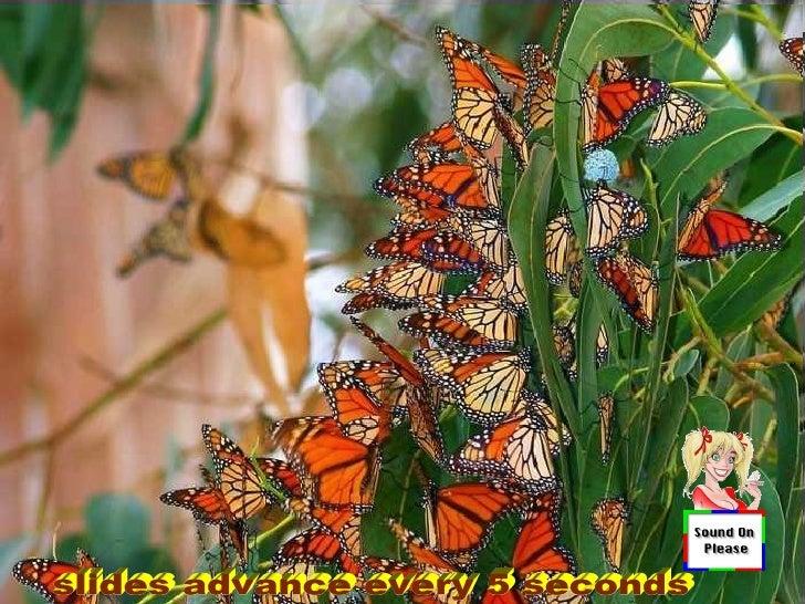 Papillons07 11-09