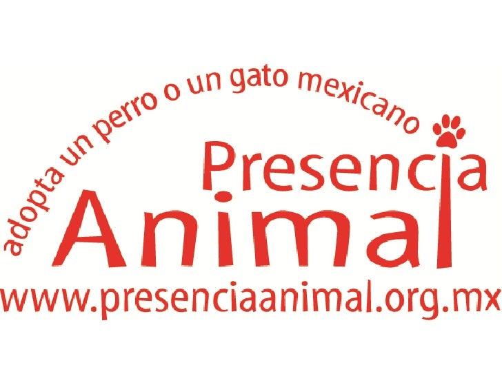 Presencia Animal Plan 100 English