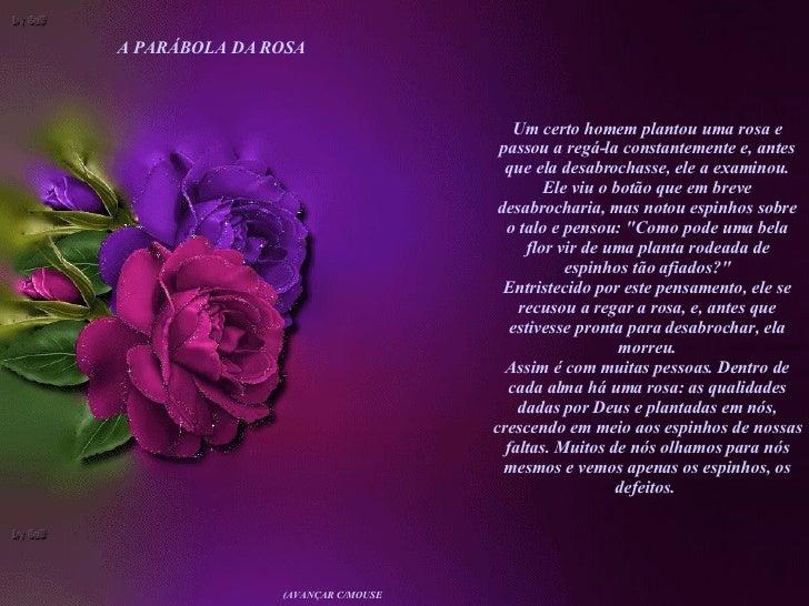 Um certo homem plantou uma rosa e passou a regá-la constantemente e, antes que ela desabrochasse, ele a examinou. Ele viu ...