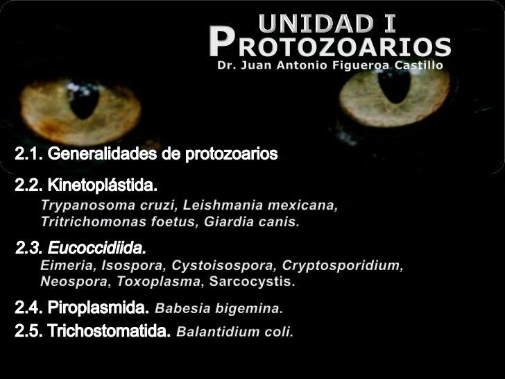 Paracit ptrotozoorios