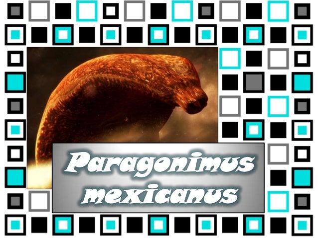 CiertoFalsoEl Paragonimus mexicanus contieneespinas en el tegumento grueso, aexcepción del borde de la ventosaventral.