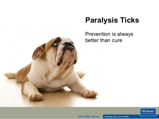Paralysis Ticks Prevention is always better than cure