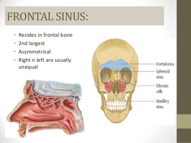 Maxillary sinus ct anatomy