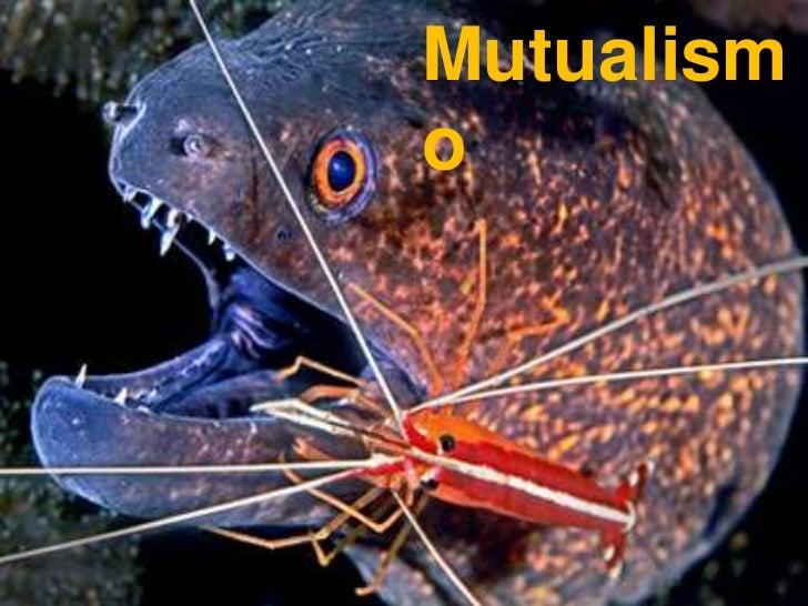Parasitismo y mutualismo