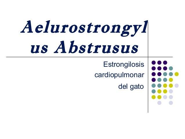 Aelurostrongyl us Abstrusus Estrongilosis cardiopulmonar del gato