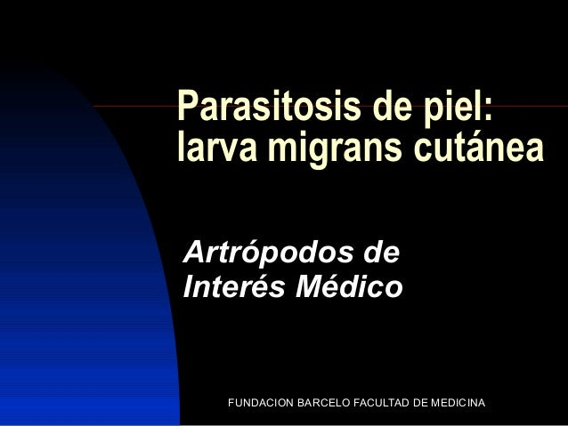 FUNDACION BARCELO FACULTAD DE MEDICINA Parasitosis de piel: larva migrans cutánea Artrópodos de Interés Médico