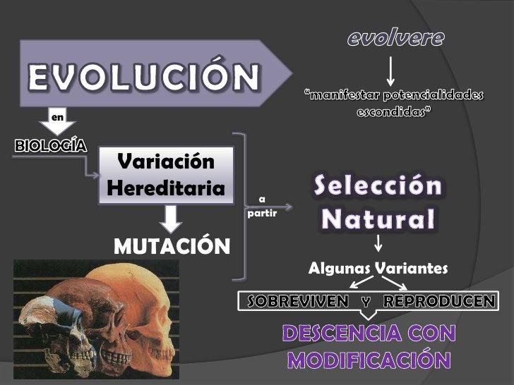 """evolvere<br />""""manifestar potencialidades escondidas""""<br />EVOLUCIÓN<br />en<br />BIOLOGÍA<br />Variación<br />Hereditaria..."""