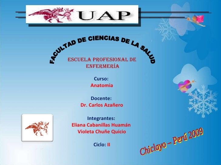 FACULTAD DE CIENCIAS DE LA SALUD ESCUELA PROFESIONAL DE  ENFERMERÍA Chiclayo – Perú 2009 Curso:  Anatomia Docente:  Dr. Ca...