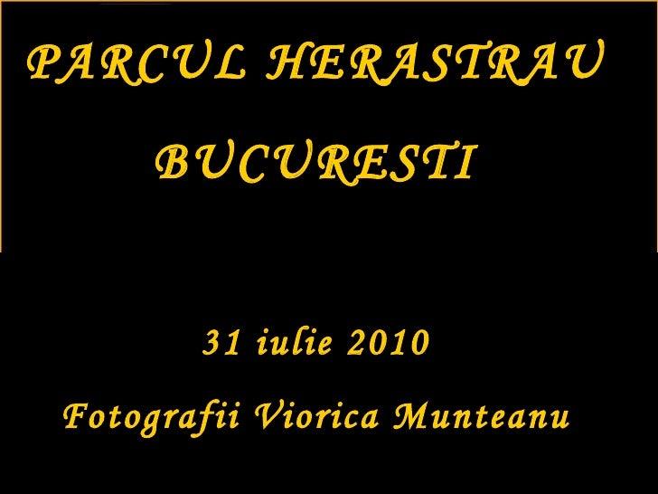 PARCUL HERASTRAU BUCURESTI 31 iulie 2010 Fotografii Viorica Munteanu