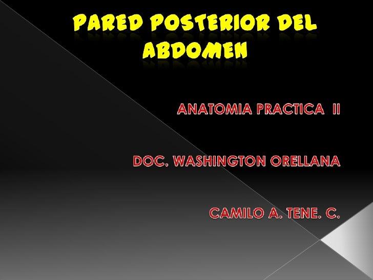 Aorta Diafragma                abdominal   Oblicuo      M. Psoasexterno, inte    menor    rno y transverso     Cuadrado   ...