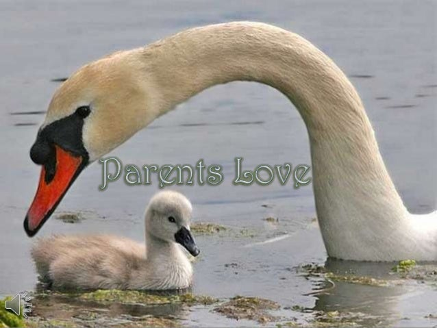 Parents love (v.m.)