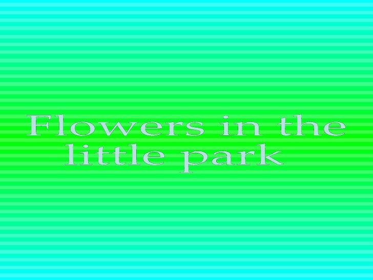 Flowers in the little park