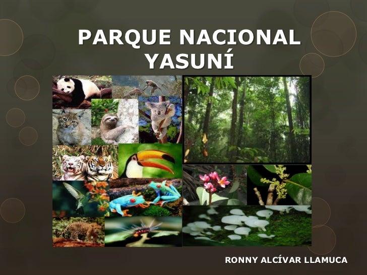 PARQUE NACIONAL    YASUNÍ         RONNY ALCÍVAR LLAMUCA