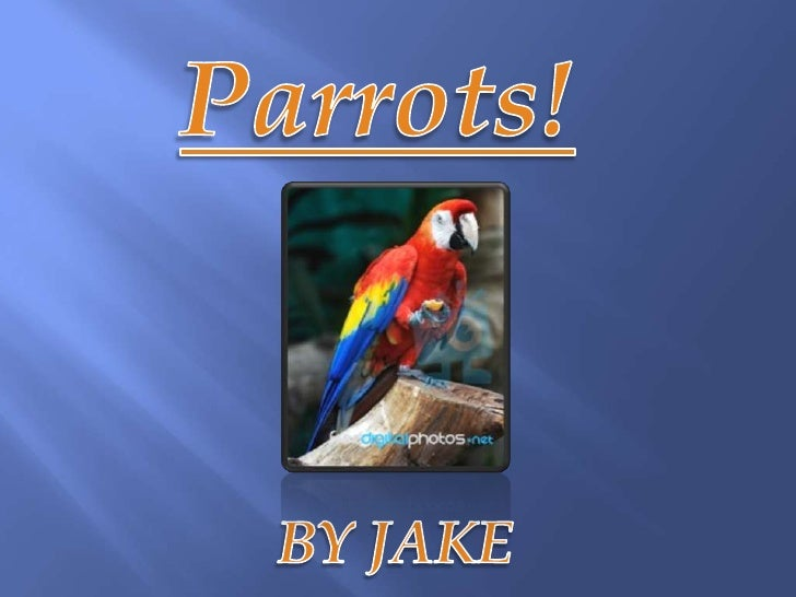 Depending on what kind of parrot your lookingat, whether it is a Macaw or just a pet parrot that  will talk, they are usua...
