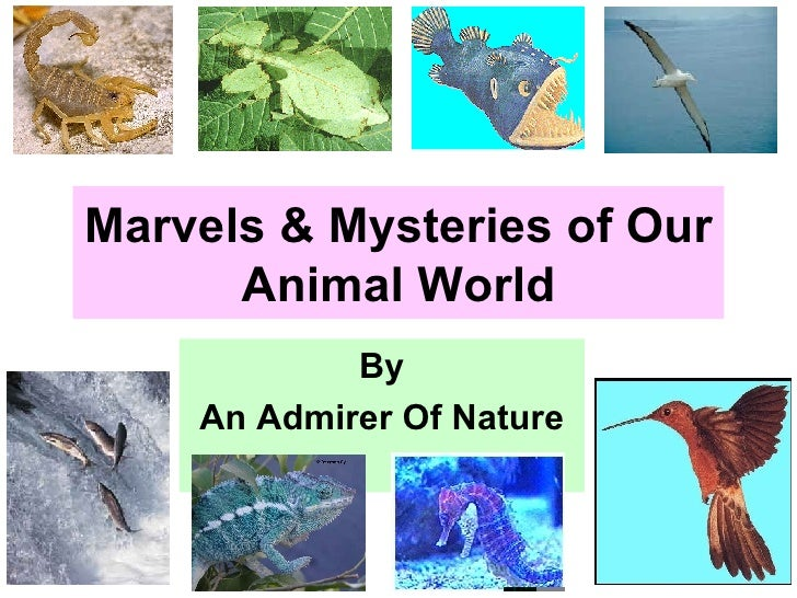 Part 1 to 4:  Marvels & Mysteries of Our Animal World